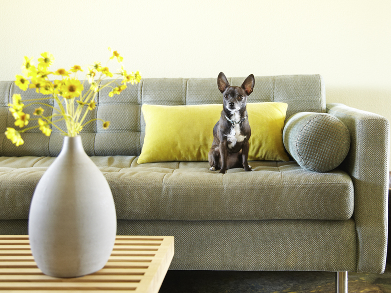8 Easy Ways to Eliminate Pet Odors from Your Home